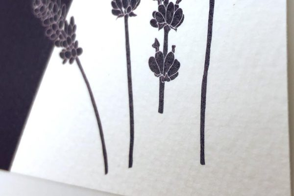 Provence close-up